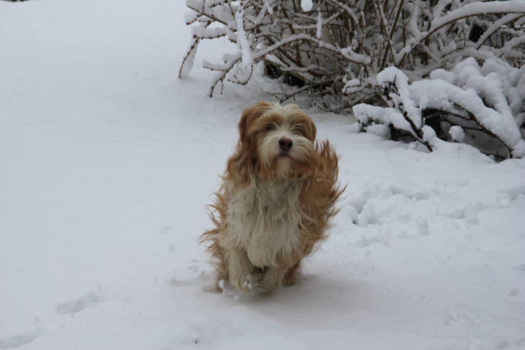 Othis court neige